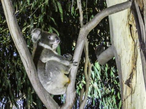 Kangaroo Island-496