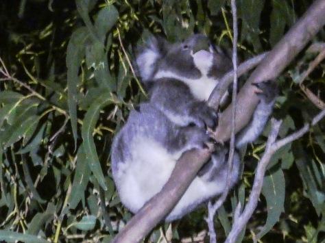 Kangaroo Island-525
