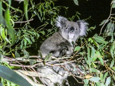 Kangaroo Island-538