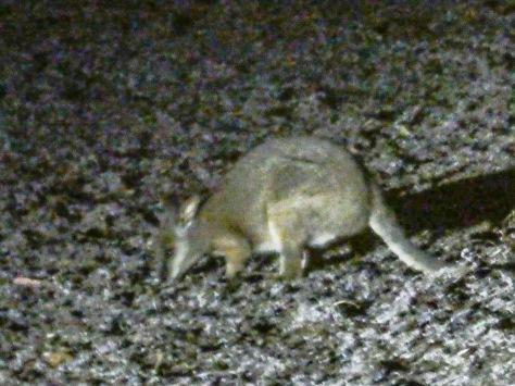 Kangaroo Island-554