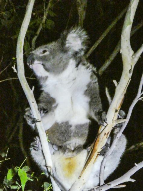 Kangaroo Island-564