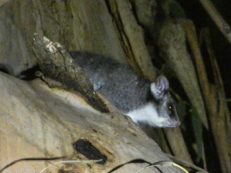 Kangaroo Island-574