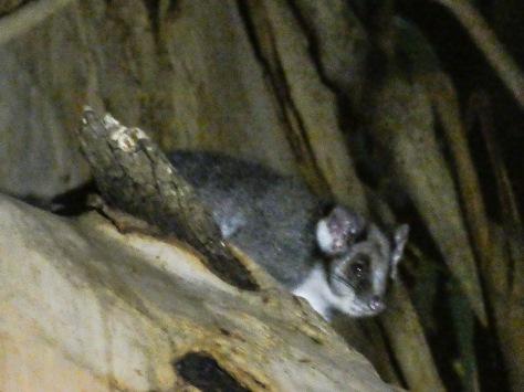 Kangaroo Island-575