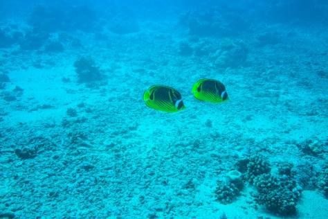 Papeete-25