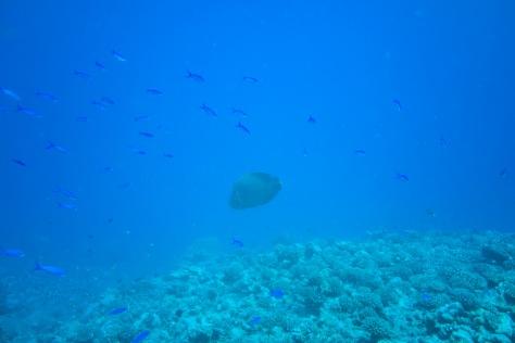 Papeete-28