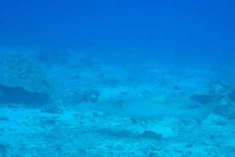 Papeete-35