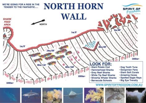 Ribbon Reef Sites-Vili-3