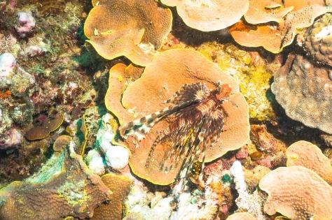 Suva Diving-12