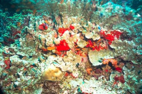 Suva Diving-26