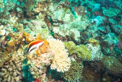 Suva Diving-7