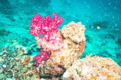 Suva Diving-9
