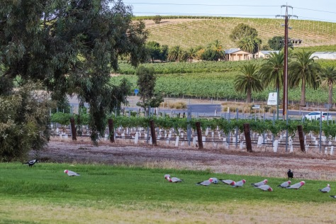 The Louise-Barossa Valley-13